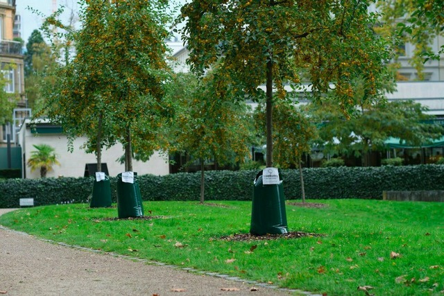 Bewässerungssack-Treebuddy Baumbewässerung Park